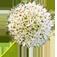 Blumenzauber – Ismaning & Heimstetten Logo