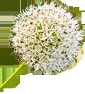 Blumenzauber Ismaning Logo